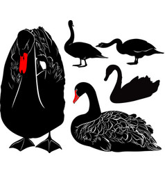 Swans bird silhouettes collection isolated vector