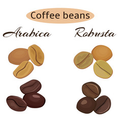Types coffee beans arabica and robusta vector