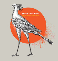 Vintage engraving of a single secretary bird vector