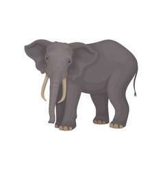 flat portrait of adult elephant wild vector image