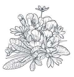 hand drawn bouquet of spring flowers and vector image
