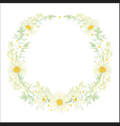 hand drawn wreath with camomile and herbs vector image