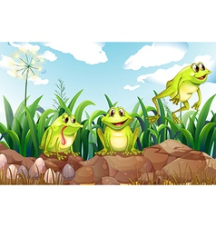 Three frogs above the rocks vector