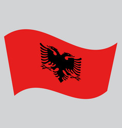 flag of albania waving on gray background vector image vector image