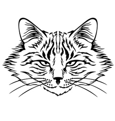 harmful cat vector image vector image