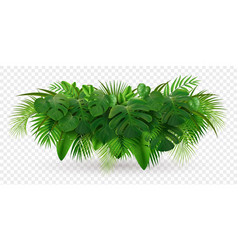 tropical leaves bush composition vector image