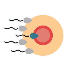 fertilization of the ovum by the spermatozoon vector image