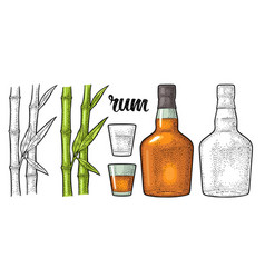 glass and bottle of rum with sugar cane engraving vector image