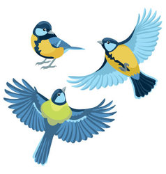 Titmouse on white background vector image