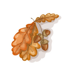 beautiful oak leaves vector image