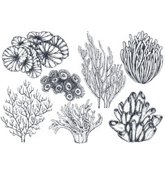 Collection of hand drawn ocean plants and vector
