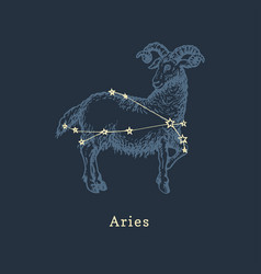Zodiac constellation aries in engraving style vector