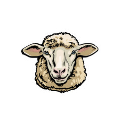 Front view sketch portrait of domestic farm sheep vector