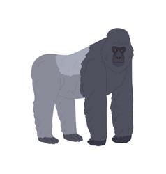 Stocky ape or gorilla standing on four legs vector
