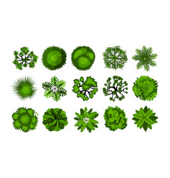 tree from above top view bushes vector image