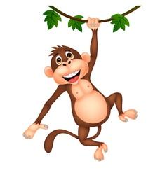 Cute monkey cartoon hanging vector image vector image