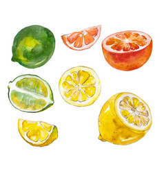 watercolor vruits isolated on white vector image vector image