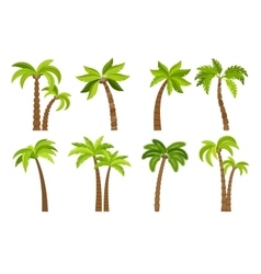 Palm trees isolated on white vector image vector image
