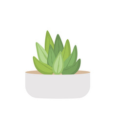 cactus and succulent in pot domestic colorful vector image