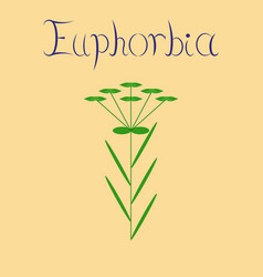 Flat on background plant euphorbia vector