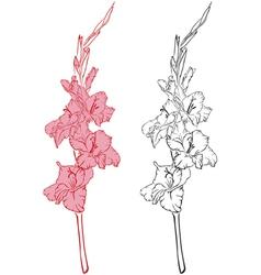 Gladiolus2 vector