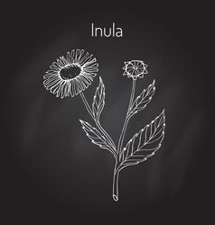 Inula vector