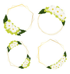 white cosmos and green hydrangea flowers bouquet vector image