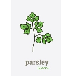 Parsley icon Vegetable green leaves vector image