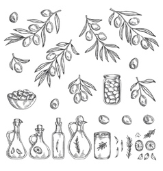 Hand drawn olive graphic set vector