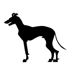 greyhound vector image
