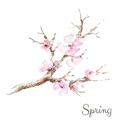 Watercolor branch of cherry blossoms vector image vector image