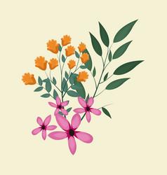 Cosmos natural floral decoration vector