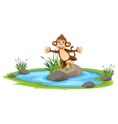 happy monkey at pond vector image