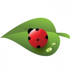 ladybird on leaf vector image