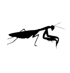 Praying mantis predatory insect realistic vector