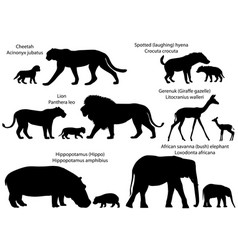 Silhouettes of animals of africa with cubs vector