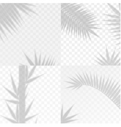 bamboo and palm branches leaves overlay effect vector image