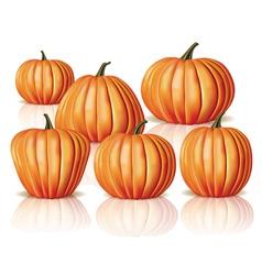 Big and small pumpkins vector