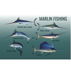 Blue black striped and white marlin swordfish vector