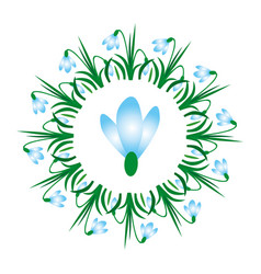 colored circular spring mandala flower snowdrop vector image