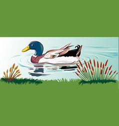 Duck in a pond vector