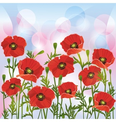 Floral background with red poppies vector image