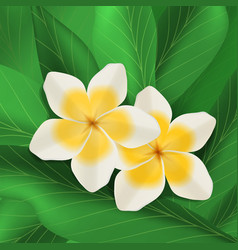 Plumeria flowers with green leaves vector