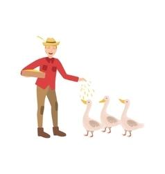 Man feeding three geese with seeds vector