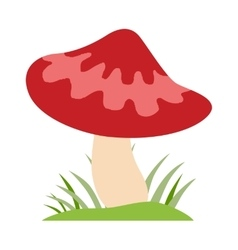 Amanita poisonous mushroom isolated on vector image