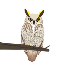 owl sits on a tree branch vector image