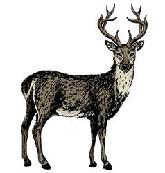 sketch of reindeer vector image