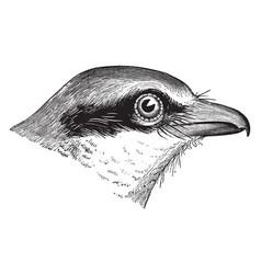 Butcher bird head vintage vector