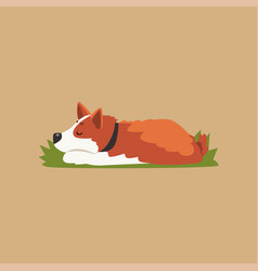 colorful with cute sleeping corgi vector image