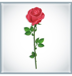 Flower red rose isolated vector
